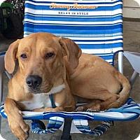 Adopt A Pet :: Texas - Oakland Park, FL