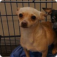 Adopt A Pet :: Bella - Godfrey, IL