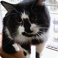 Adopt A Pet :: Raoul - Witter, AR