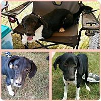 Adopt A Pet :: Rylie - Ringwood, NJ