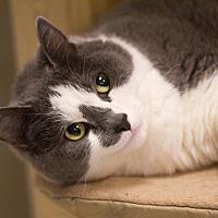 Adopt A Pet :: Aeneas - Grayslake, IL