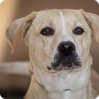 Adopt A Pet :: Venice - Westminster, CA