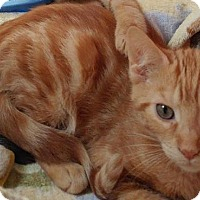 Adopt A Pet :: Merle - Middletown, NY