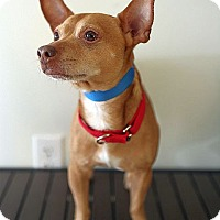 Adopt A Pet :: Larry - Berkeley, CA
