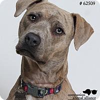 Adopt A Pet :: Paris (Foster Care) - Baton Rouge, LA