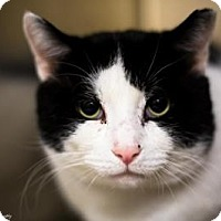 Adopt A Pet :: Ferdinand--Gentle Giant - Worcester, MA