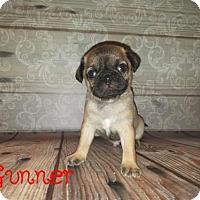 Adopt A Pet :: Gunner - Rathdrum, ID
