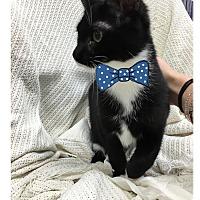 Adopt A Pet :: Smackey - Paducah, KY