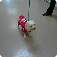Adopt A Pet :: Charlie - West Palm Beach, FL