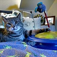 Adopt A Pet :: Murray - Brainardsville, NY