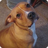 Adopt A Pet :: Luna - Lockport, NY