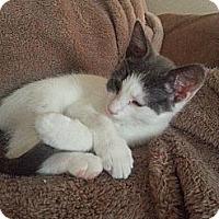 Adopt A Pet :: Eli - Riverside, RI