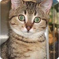 Adopt A Pet :: Banyan - Fort Lauderdale, FL