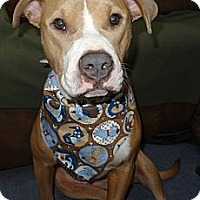 Adopt A Pet :: Hope-URGENT!!! - Hadley, MI
