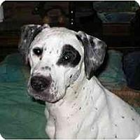 Adopt A Pet :: Duke - Milwaukee, WI