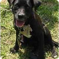 Adopt A Pet :: Tori - Miami, FL