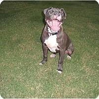 Adopt A Pet :: Mabel - Killen, AL