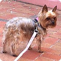 Adopt A Pet :: Linda - Miami, FL