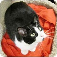 Adopt A Pet :: Lacy - Irvine, CA