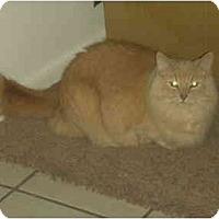 Adopt A Pet :: Crooksie - Washington Terrace, UT