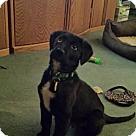 Adopt A Pet :: Kody