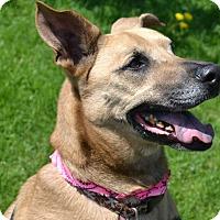 Adopt A Pet :: Nema (Sponsored) - East Smithfield, PA