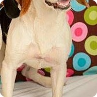 Adopt A Pet :: Phoebe - Baton Rouge, LA