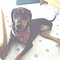 Adopt A Pet :: Bromley -Adopted! - Kannapolis, NC