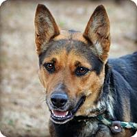 Adopt A Pet :: Mia~Meet me ! - Glastonbury, CT