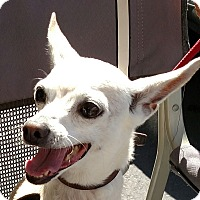 Adopt A Pet :: Blondie - San Diego, CA