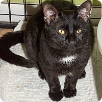 Adopt A Pet :: Nerino - St. Louis, MO