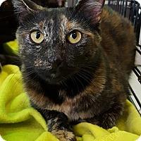 Adopt A Pet :: Maddy - Gilbert, AZ