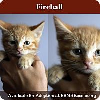 Adopt A Pet :: Fireball - Temecula, CA