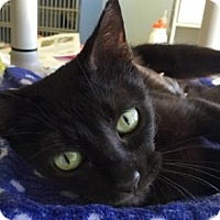 Adopt A Pet :: Smokey - Fort Collins, CO