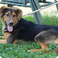 Adopt A Pet :: Stardust(70 lb) Big Sweetie! - SUSSEX, NJ