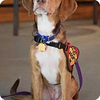 Adopt A Pet :: Posey - Charelston, SC