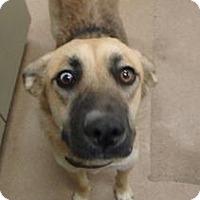 Shepherd (Unknown Type)/Terrier (Unknown Type, Medium) Mix Dog for adoption in Apple Valley, California - Queenie #161147
