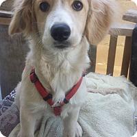 Adopt A Pet :: Yuya - San Diego, CA