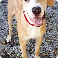 Adopt A Pet :: Barney - Key Largo, FL