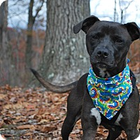 Adopt A Pet :: Brown Sugar - New Castle, PA