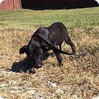 Adopt A Pet :: Bitsey - Beacon, NY