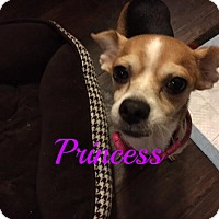 Adopt A Pet :: Princess - Maitland, FL