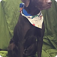 Adopt A Pet :: Murky - Hibbing, MN