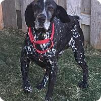 Adopt A Pet :: Buddy - Omaha, NE