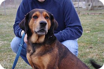 Bloodhound Mix Dog for adoption in Elyria, Ohio - Dewey-Prison Dog