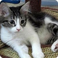 Adopt A Pet :: Sparkle - Seminole, FL