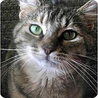 Adopt A Pet :: Emily - Xenia, OH
