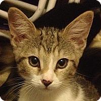Adopt A Pet :: Casey - Winchester, CA