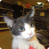 Adopt A Pet :: Chilly - Medina, OH