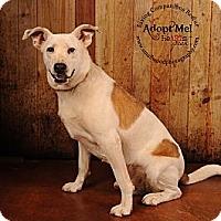 Adopt A Pet :: Burt - Jackson, TN